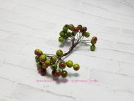 Ягодки глянцевые, цвет зелено-красный, пучок 40 ягодок, диаметр ягодки 11 мм