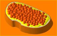 Пластиковая форма для мыла 375 - Бутерброд К/И