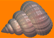 Пластиковая форма для мыла 477 - Ракубок
