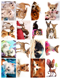 Водорастворимые картинки Кошечки-Собачки